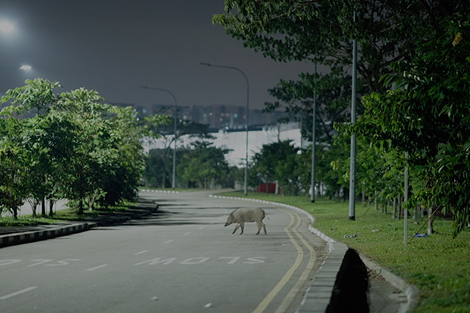 A Singapore street at night with a boar